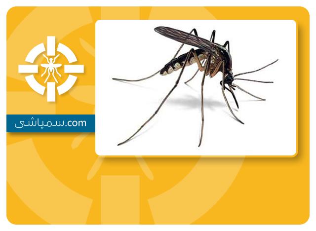 سمپاشی پشه مالاریا